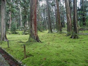 ふるさとの魅力を語ろう!景観づくり団体のつどい 木々の根元に繁茂する苔/どこまでもアマチュア