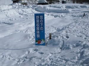 さかだに雪まつり 雪の下の野菜収穫体験の看板/どこまでもアマチュア