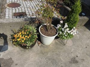 ミニミニ家庭菜園&ミニガーデニング 寄せ植えの鉢と南天/どこまでもアマチュア