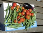 ミニミニ家庭菜園&ミニガーデニング/どこまでもアマチュア 本日の収穫