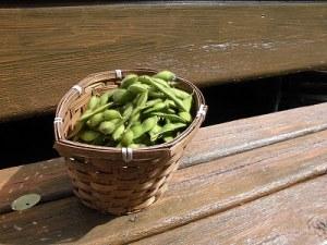 ミニミニ家庭菜園&ミニガーデニング 収穫した枝豆/どこまでもアマチュア