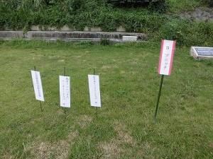 セイタカアワダチソウ駆除作戦 割り当て標示/どこまでもアマチュア