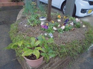 ミニミニ家庭菜園&ミニガーデニング 玄関先の花壇のクリスマスローズとパンジー/どこまでもアマチュア