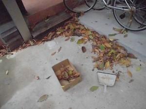 日曜大工教室~我流か自己流か編~ 枯れ葉の掃除/どこまでもアマチュア