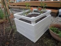プランター完成し、キンモクセイを植えた。