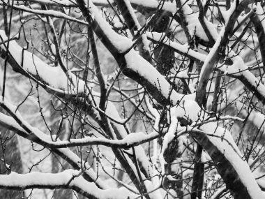 winterstormgia-2