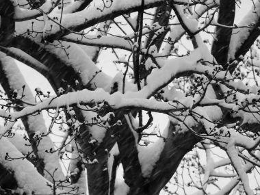 winterstormgia-5
