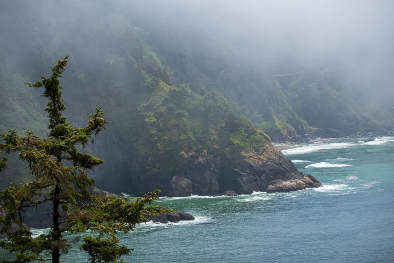 The Oregon coastline with tree in the foreground.