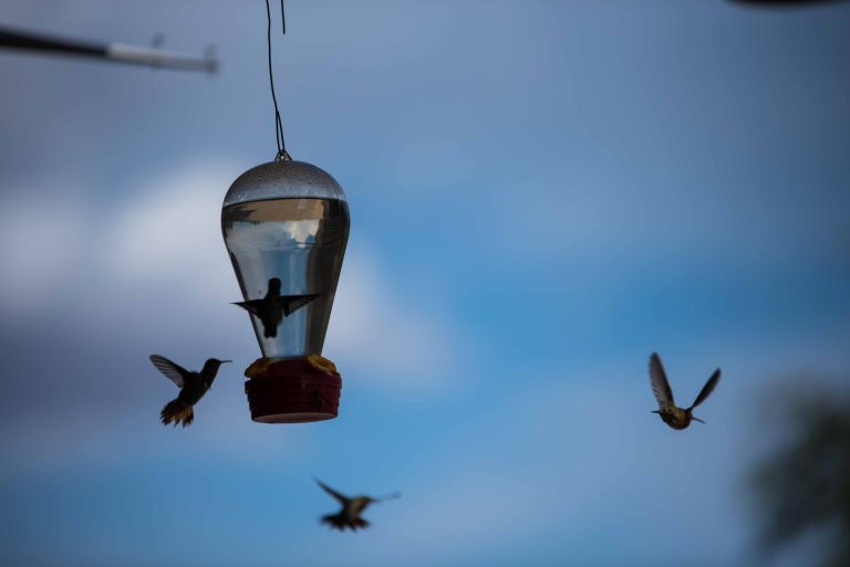 Four hummingbirds flying around one of the feeders.