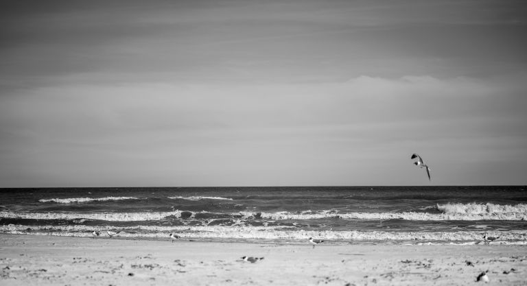 Bird flying above the waves in black and white photo.