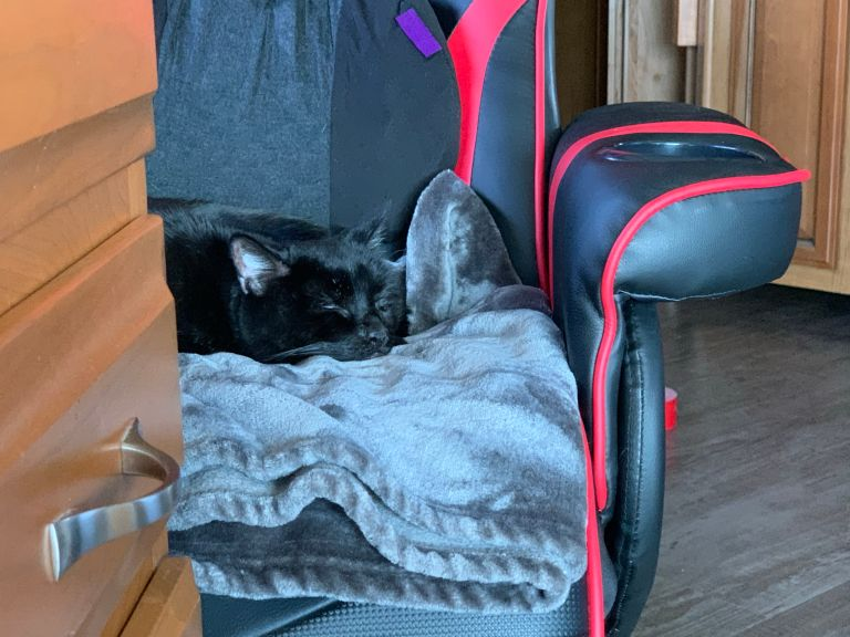 A black cat on a blanket on an office chair, facing forward.