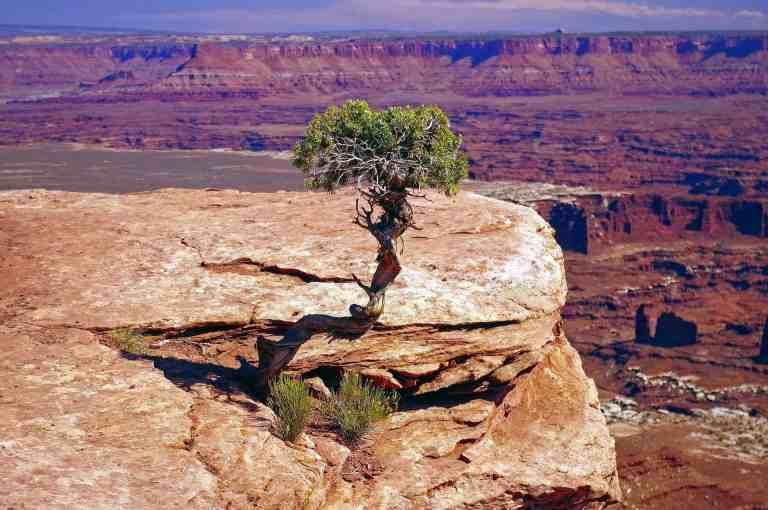 canyonlands tree