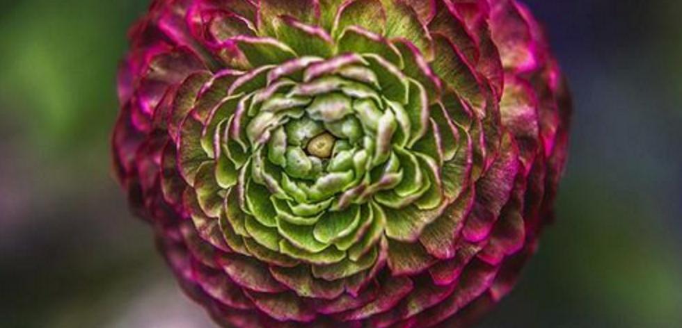 intriguing people, flower