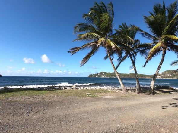 Palmtrees near Soufriere, St Lucia