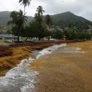 Seaweed Plage in Speyside