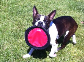 The Frisbee is wet because she peed on it, and I had to rinse it off :(