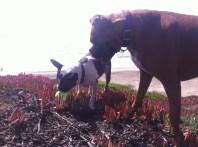 Ace and Parker investigate a ball
