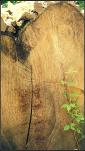 treegrain1