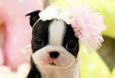 http://www.buzzfeed.com/conzpreti/little-animals-that-will-warm-your-heart-today?sub=2978268_2395195#.vc0Ma2Y9Lr