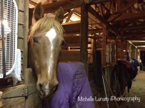 My horse Daisy.