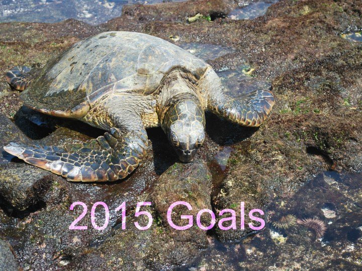 2015 Goals, turtle, Hawaii