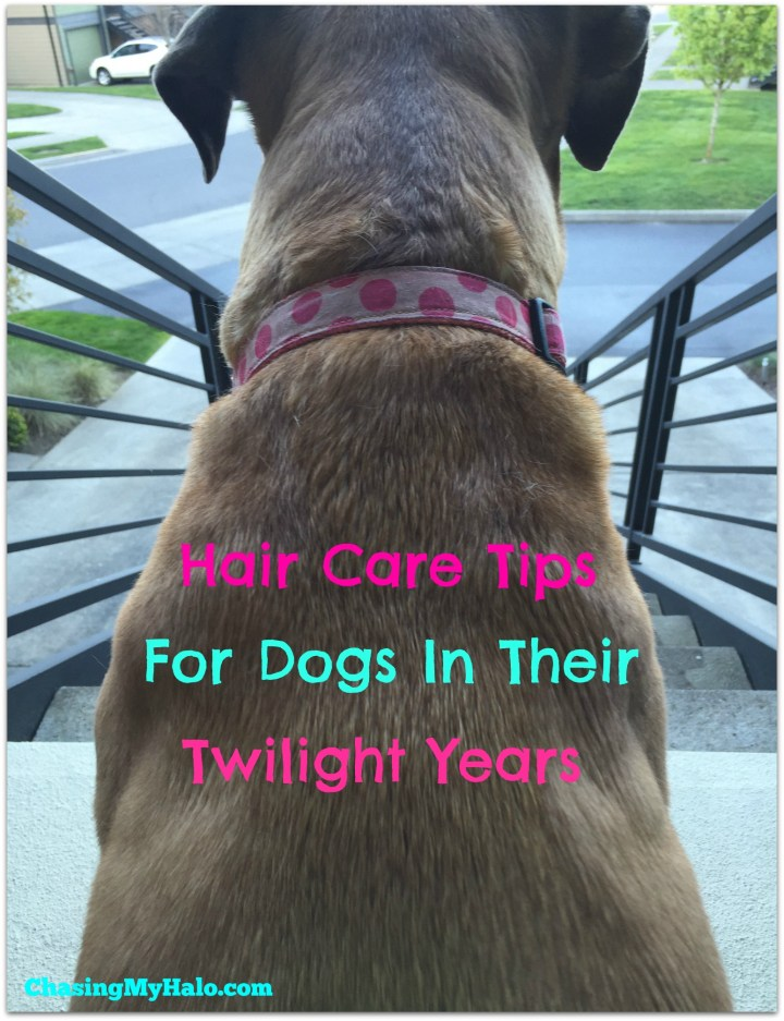 Hair Care Tips for Dogs in Their Twilight Years