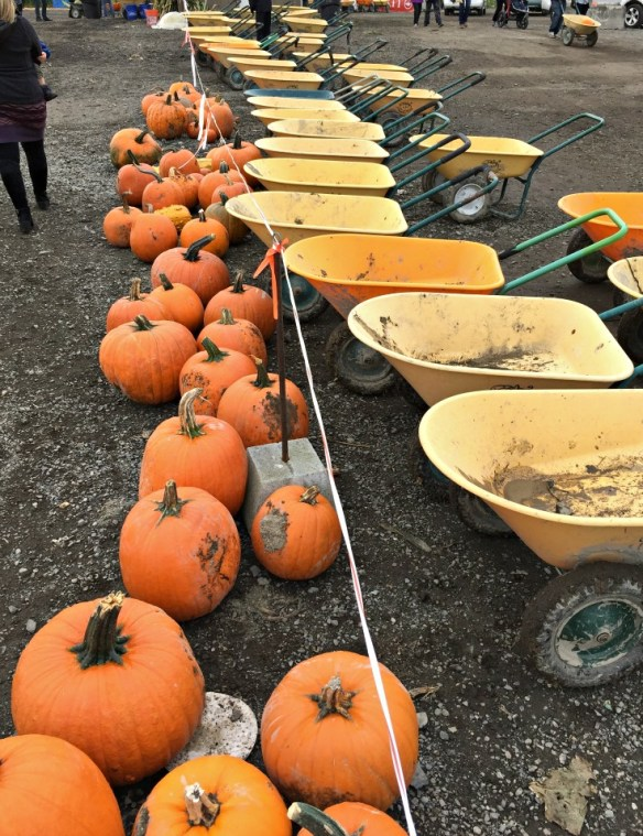 Things To Do At A Local Pumpkin Patch