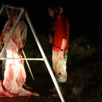 Everything that can go wrong when you try to butcher your pigs (GRAPHIC)