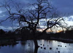 Blue sunset with tree at Slimbridge - chasing starry skies