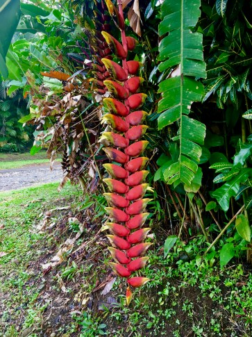 Interesting plants along the way