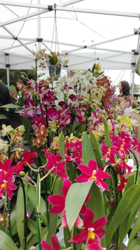 orchidee a planta 2018 orto botanico di napoli
