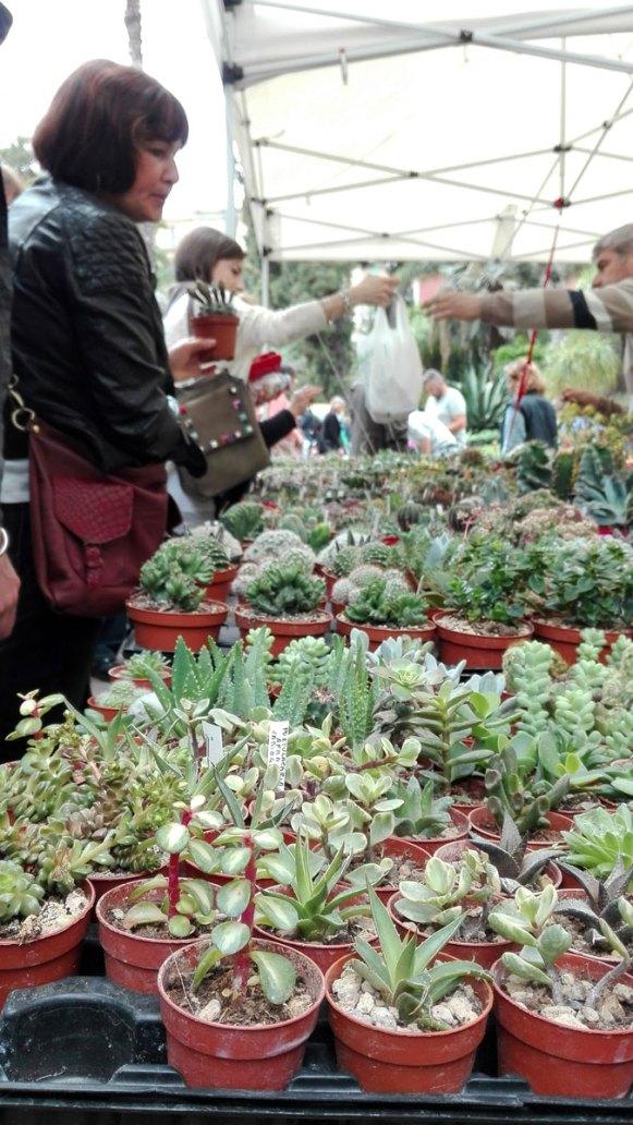 succulente a planta 2018 orto botanico di napoli