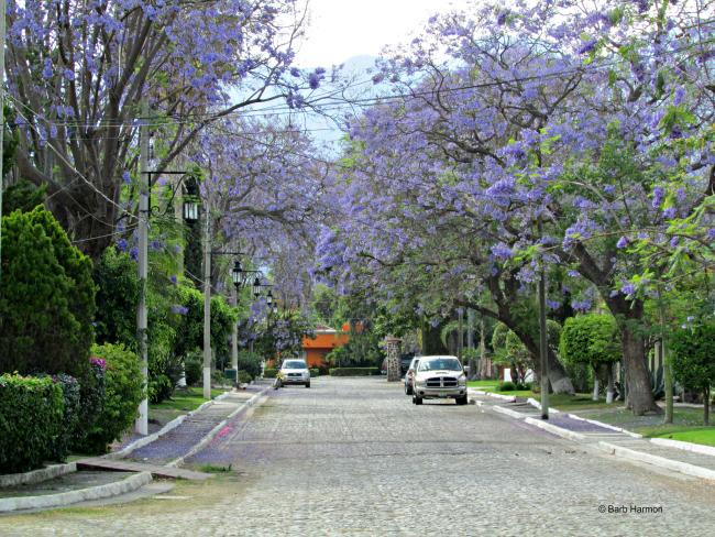 Street the Real de Chapala hotle