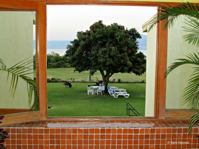 scene from the window