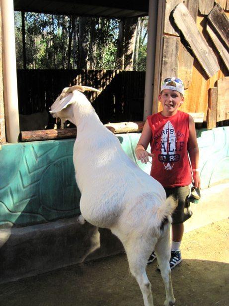 hunter safari goat petting