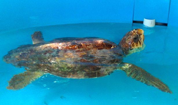 turtle rescue 2