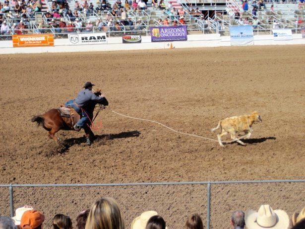 calf roping 6
