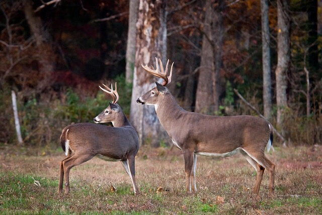 "What a ""Trophy Buck"" is to me…The One That Got Away"