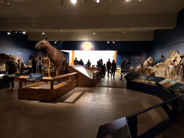 The Cenozoic Hall at the Carnegie Museum of Natural History