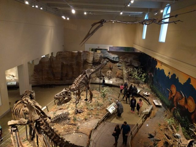 Overhead view of the Cretaceous hall at the Carnegie Museum of Natural History