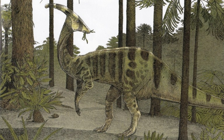Cryptic Parasaurolophus