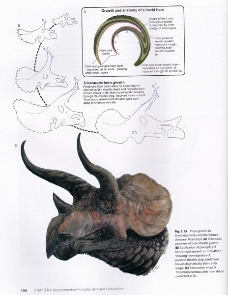 TBH Triceratops horns