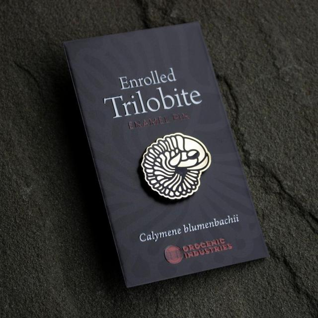 Gold enrolled trilobite enamel pin by Orogenic Industries
