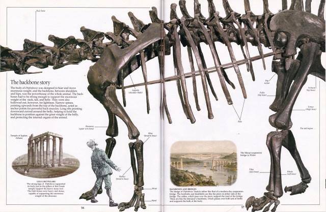 Diplodocus body spread