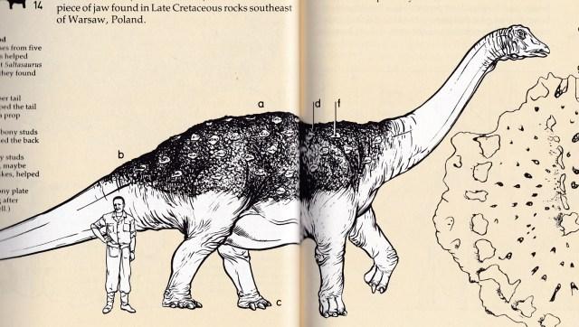 Field Guide Saltasaurus