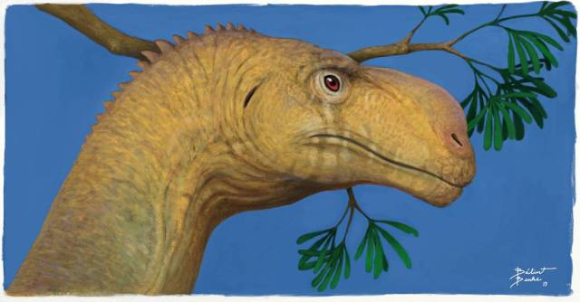 Portrait view of Plateosaurus by Bálint Benke
