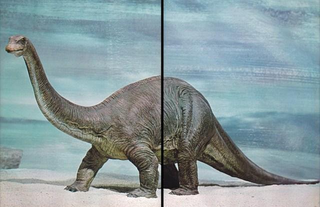 Apatosaurus by Arthur Hayward