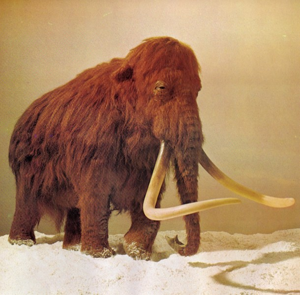 Woolly mammoth by G Kinns