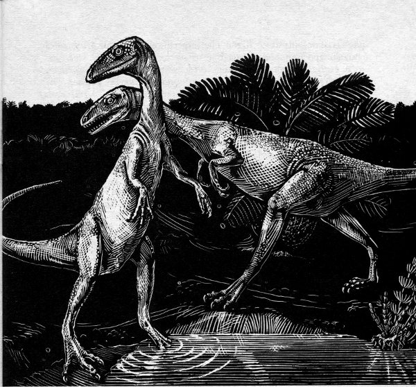 Coelophysis black and white drawing