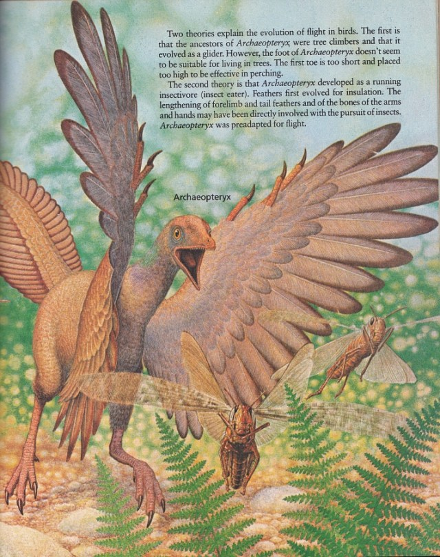 Archaeopteryx by Peter Zallinger